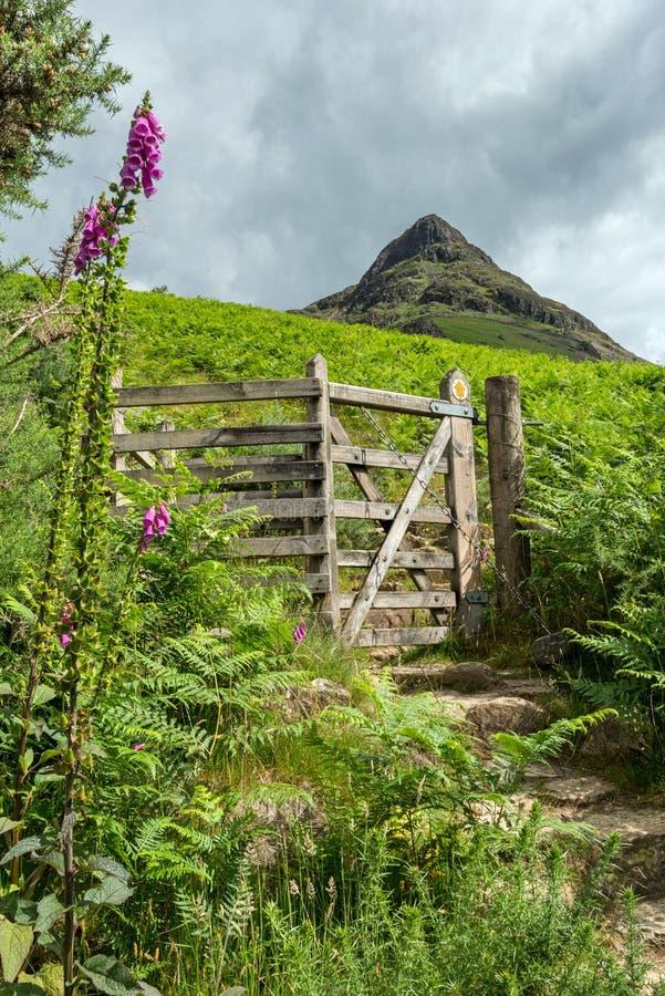 Sökväg till Yewbarrow Mountain royaltyfri fotografi