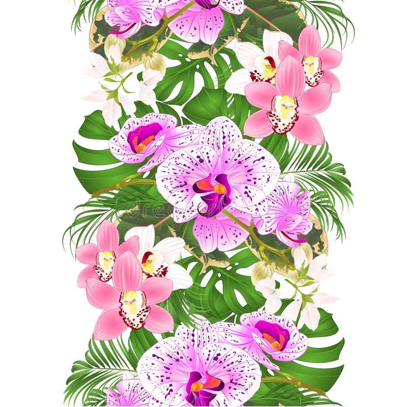 Sömlös bakgrund för gräns med blom- ordning för tropiska blommor, med härlig purpurfärgad och vit orkidéPhalaenopsis och royaltyfri illustrationer