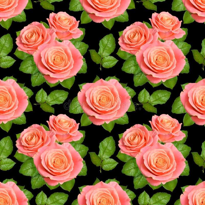 Sömlös bakgrund med rosa rosor isolerat på svart backgroun arkivbild