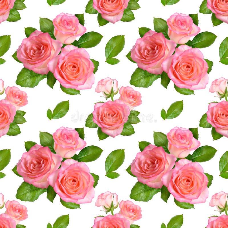 Sömlös bakgrund med rosa rosor Isolerat på vit backgroun royaltyfria foton