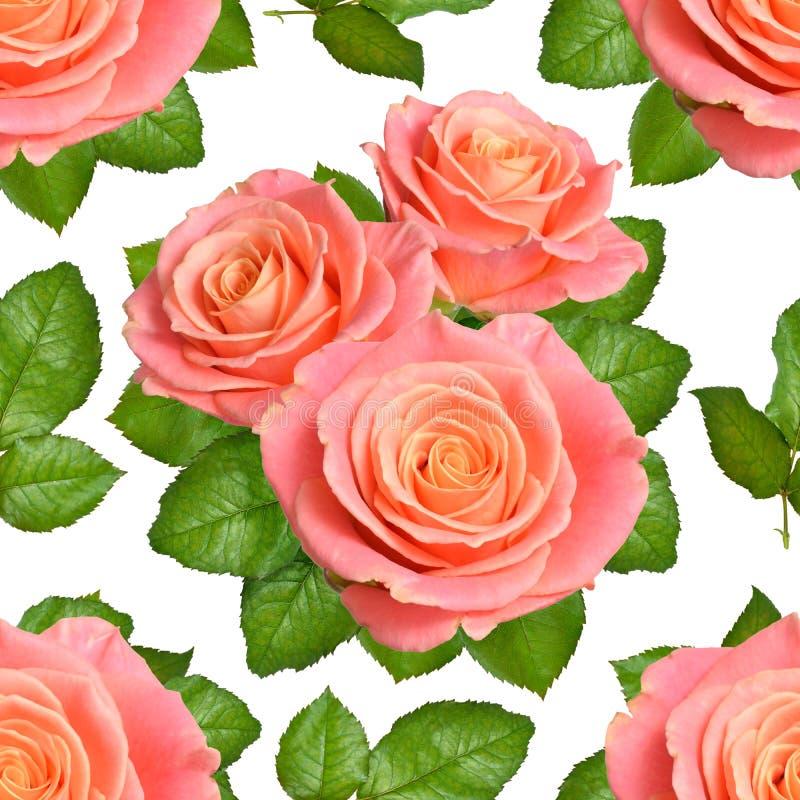 Sömlös bakgrund med rosa rosor Isolerat på vit backgroun arkivfoton