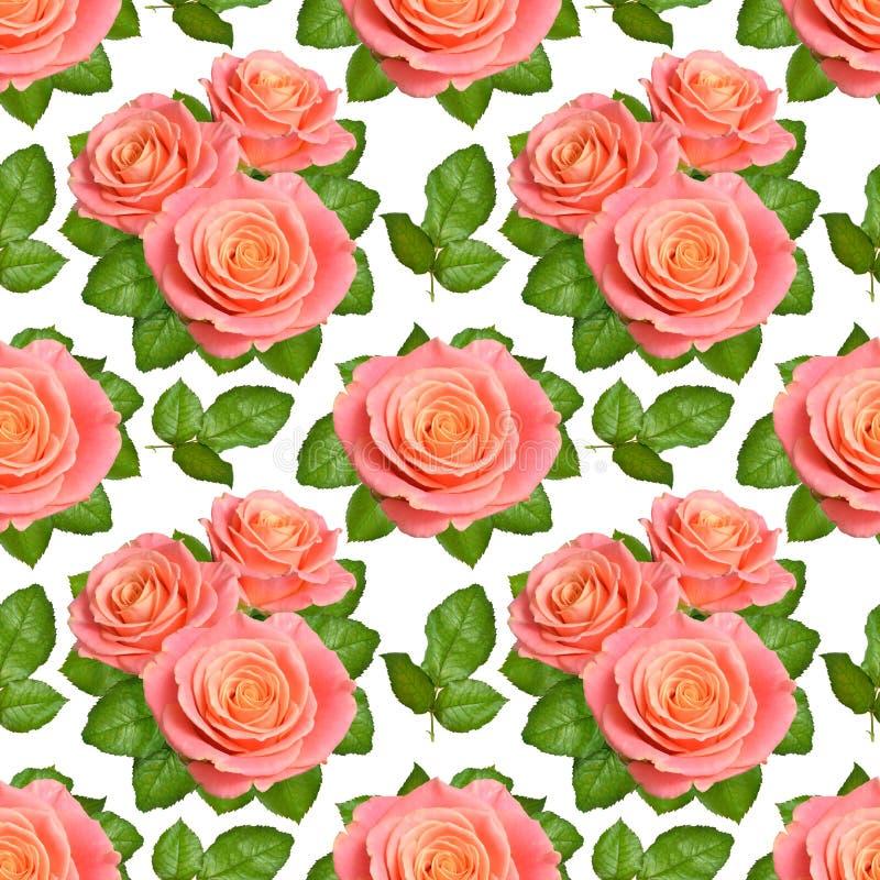 Sömlös bakgrund med rosa rosor Isolerat på vit backgroun royaltyfri fotografi