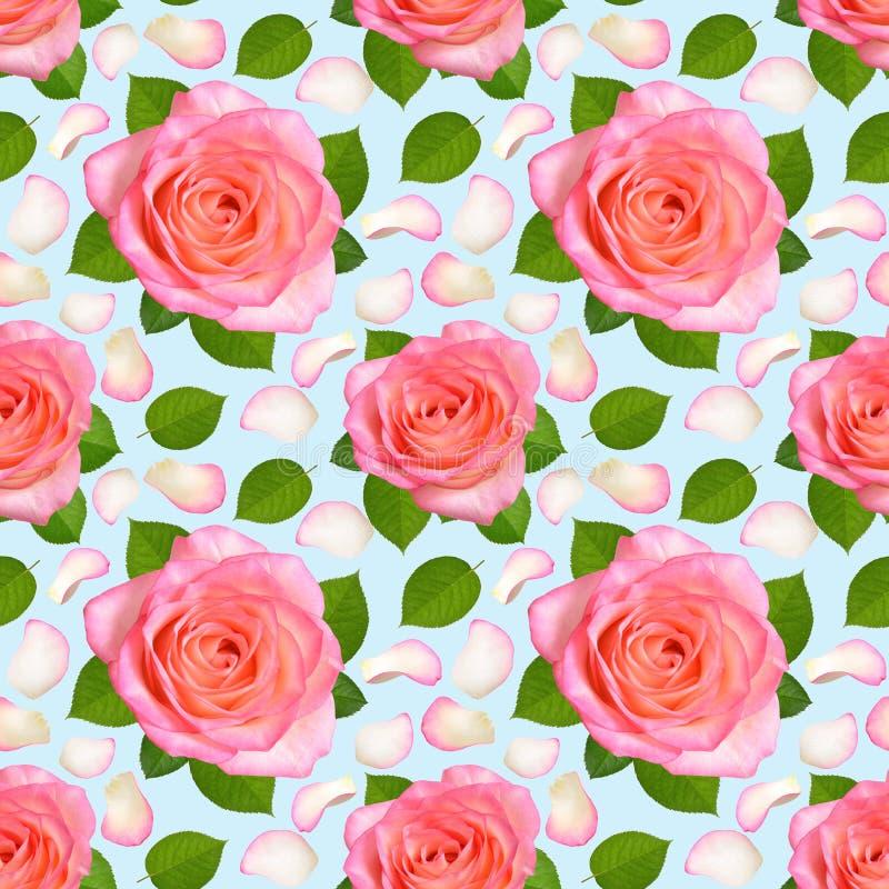 Sömlös bakgrund med rosa rosor och kronblad arkivbilder