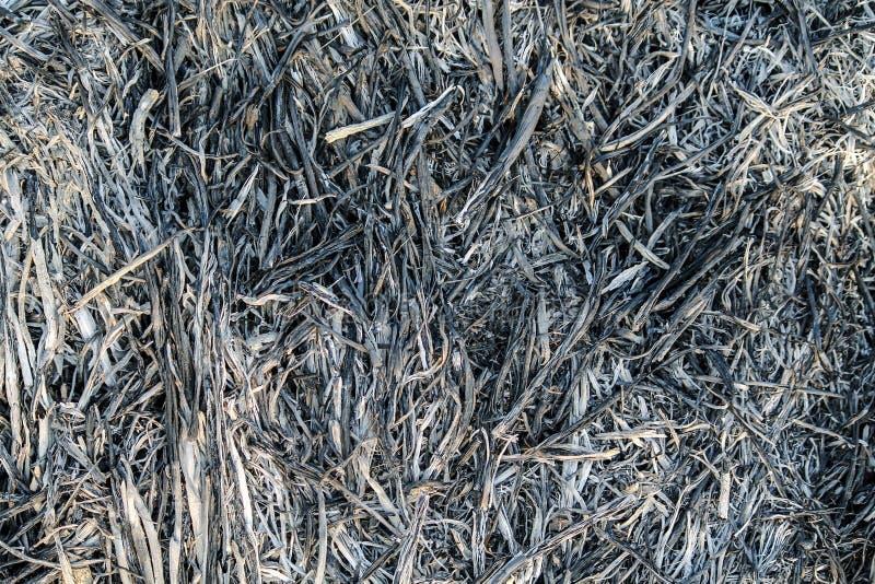 Sömlös brännskada Ash Texture arkivbild