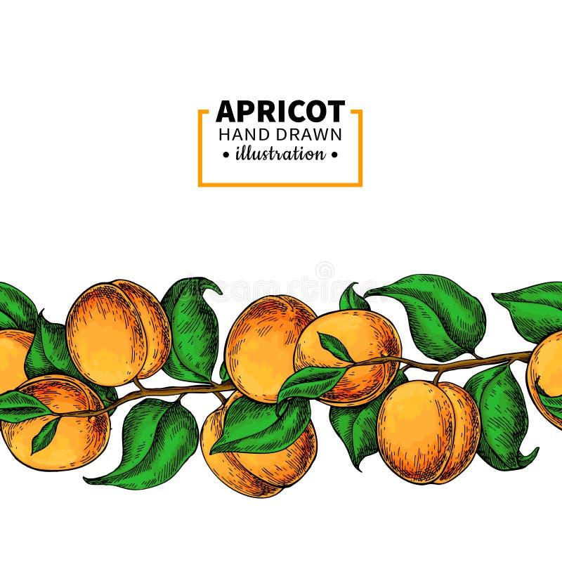 Sömlös gräns för aprikosfilial Hand dragen isolerad frukt Sommarmatillustration royaltyfri illustrationer