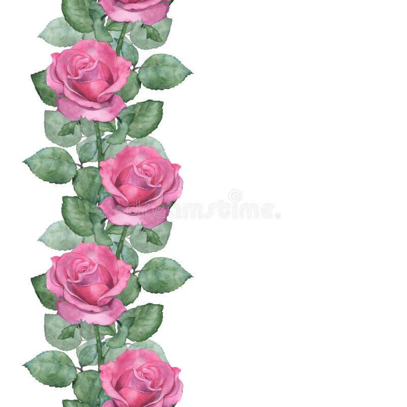 Sömlös gräns för vattenfärg av rosa rosor stock illustrationer