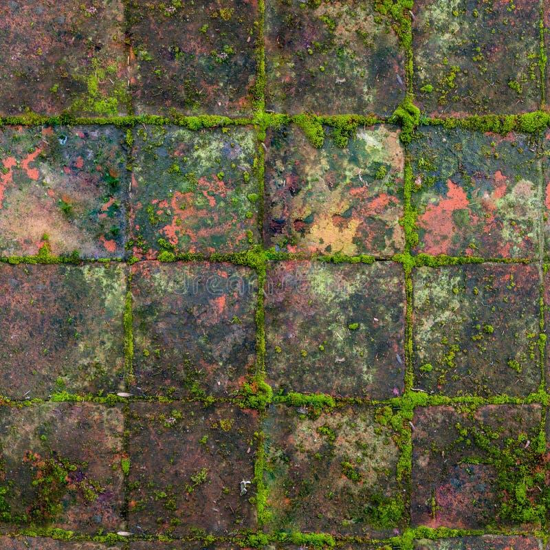 Sömlös HQ, gamla medeltida mossiga utomhus- tegelplattor för tileable textur royaltyfria bilder