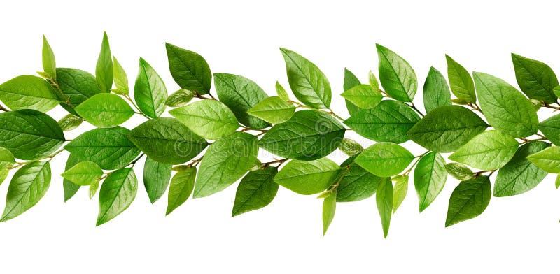 Sömlös linje modell med nya gröna sidor royaltyfri fotografi