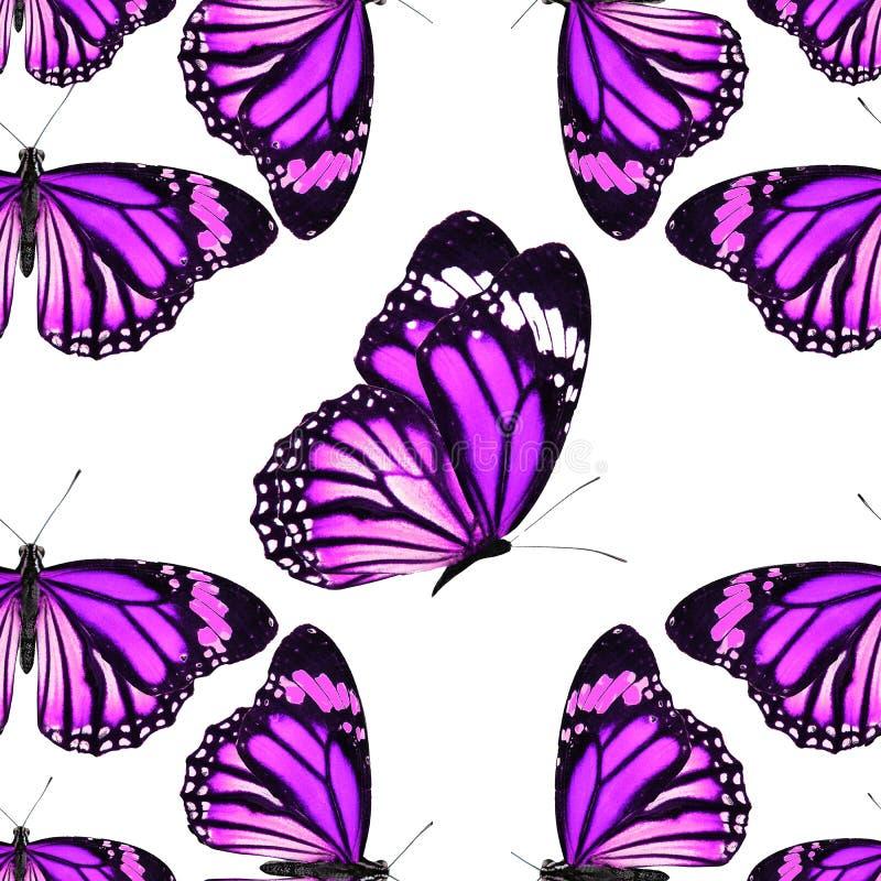 Sömlös modell av kulöra tropiska fjärilar som isoleras på vit bakgrund royaltyfri fotografi
