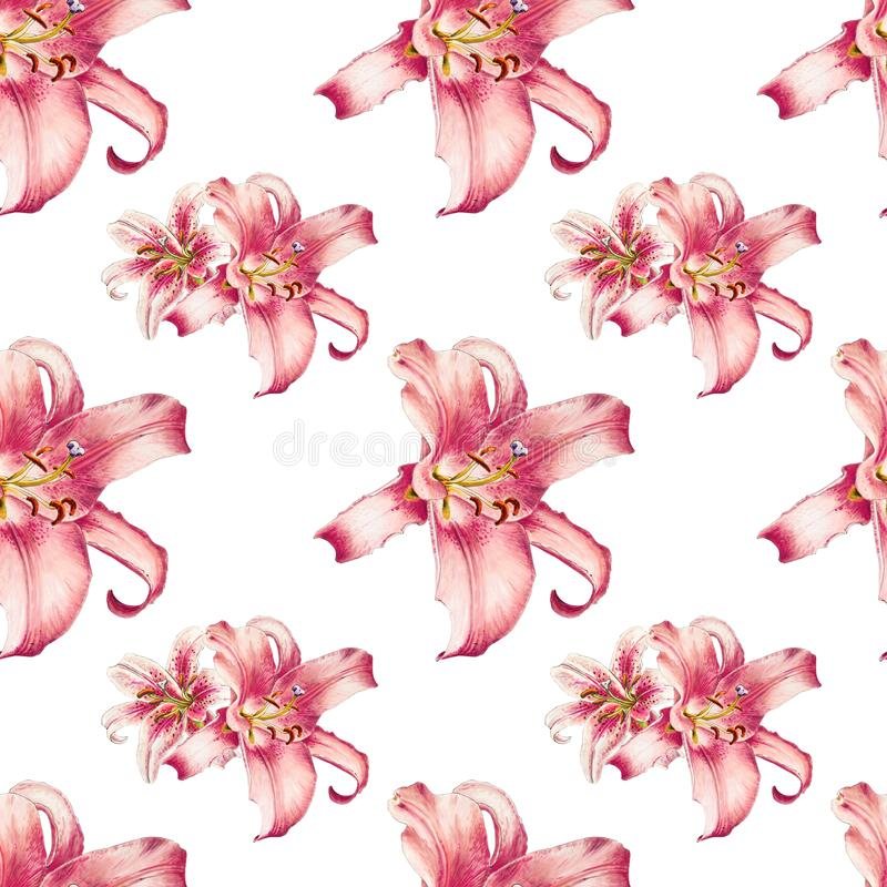 Sömlös modell för härlig rosa lilja Bukett av blommor Blom- tryck Mark?rteckning vektor illustrationer