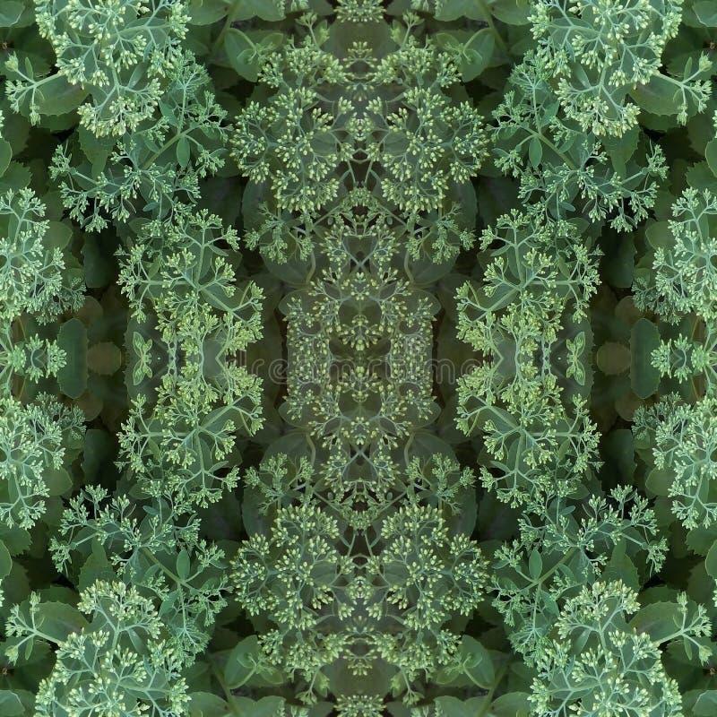 Sömlös modell för naturliga växtbeståndsdelar Ljusa blommaknoppar av dekorativ kål och gröna sidor arkivfoto