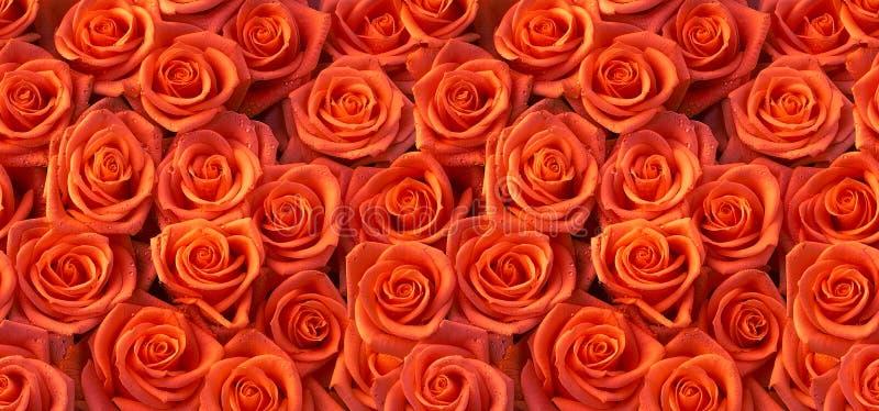 Sömlös modell för röda rosor royaltyfri foto