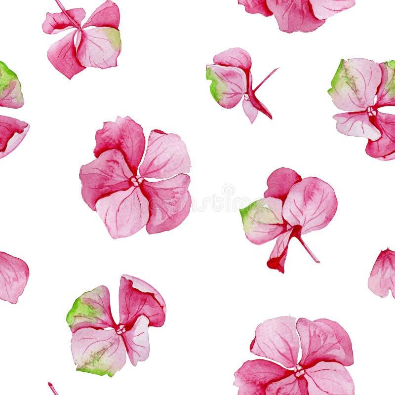 Sömlös modell för rosa vanlig hortensiavattenfärg stock illustrationer