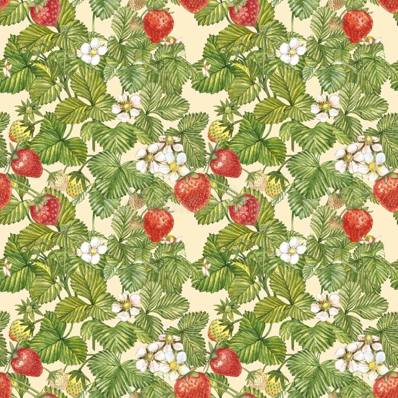 Sömlös modell för vattenfärg med jordgubbesidor med blommor och mogna bär på vit Bakgrundsdesign för naturligt stock illustrationer