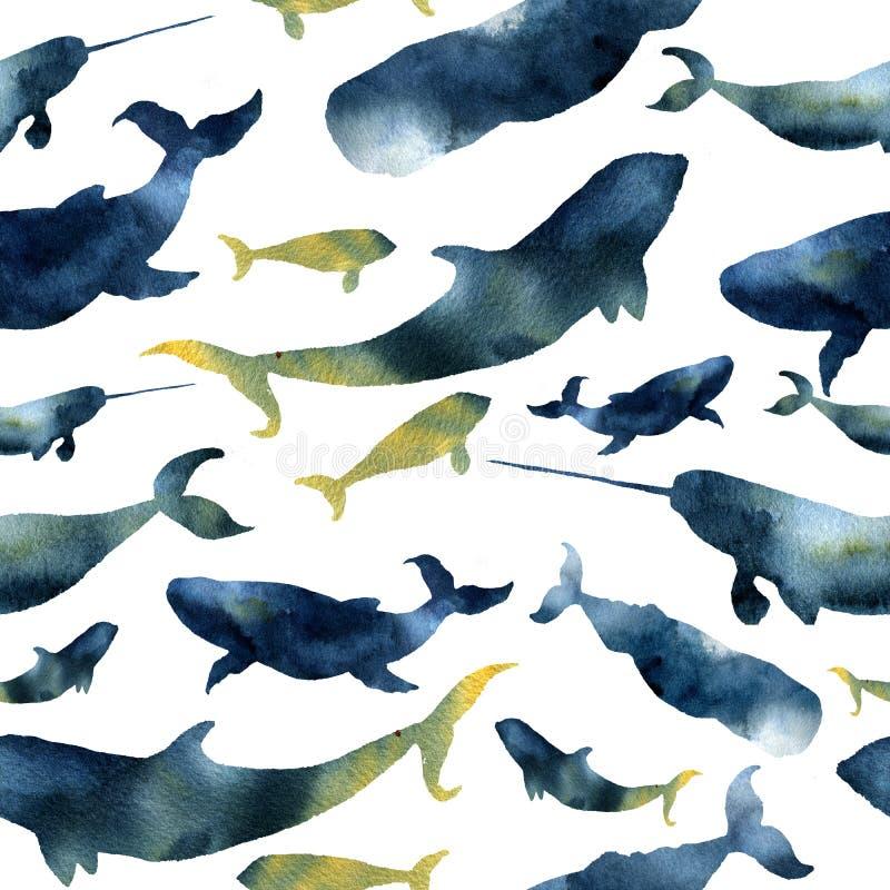 Sömlös modell för vattenfärg med konturer av val Illustration med blåa val, cachalot, späckhuggaren och narval som isoleras på wh royaltyfri illustrationer