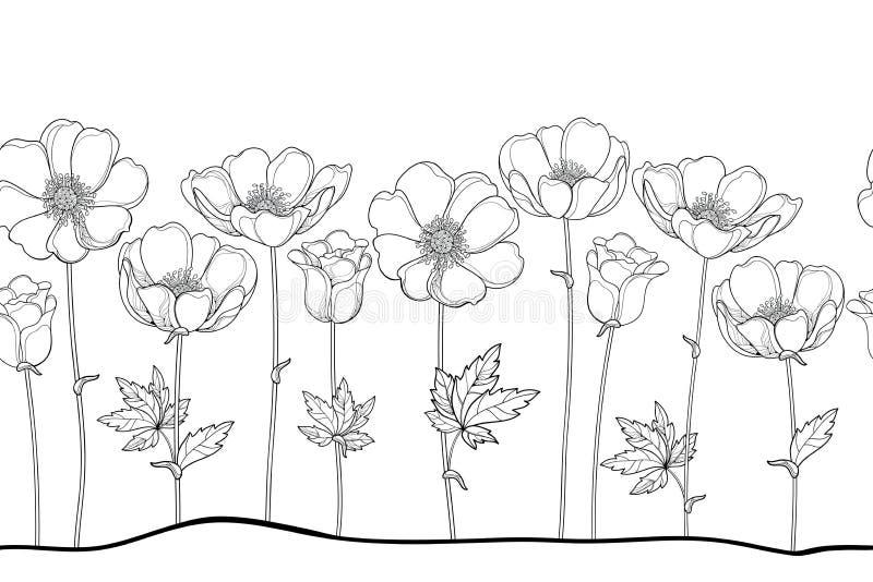 Sömlös modell för vektor av översiktsanemonen eller Windflower, knopp och blad i svart på den vita bakgrunden Horisontalgräns royaltyfri illustrationer