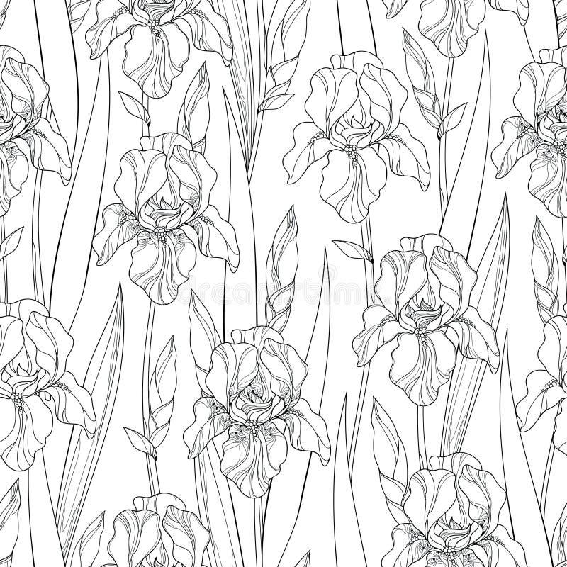 Sömlös modell för vektor med den översiktsirisblommor, knoppen och sidor i svart på den vita bakgrunden blom- utsmyckat för bakgr vektor illustrationer