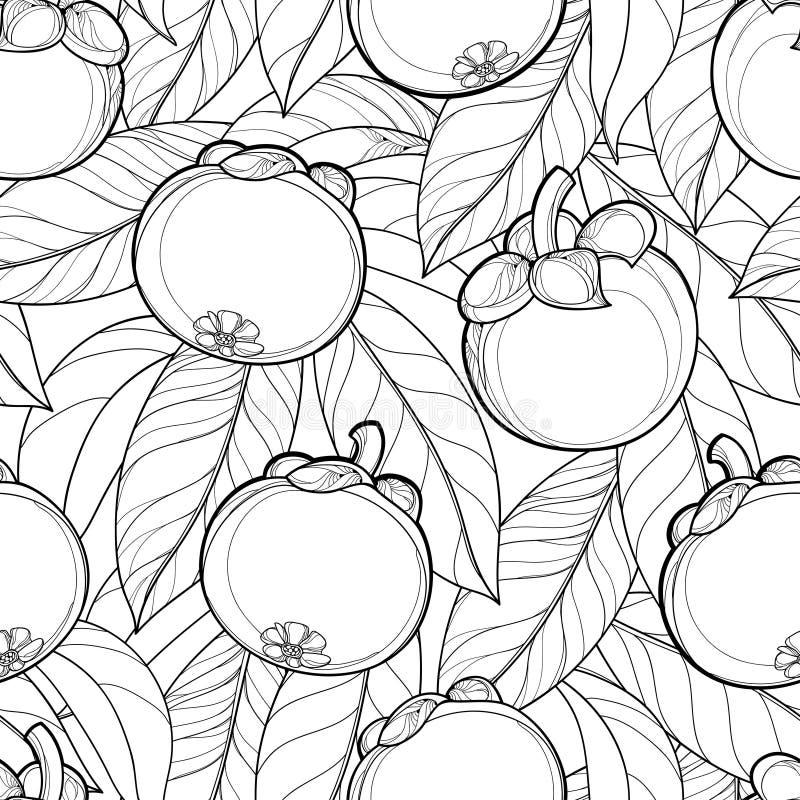 Sömlös modell för vektor med frukt och bladet för översiktsmangosteen- eller Garciniamangosteen på den vita bakgrunden Vit bakgru vektor illustrationer