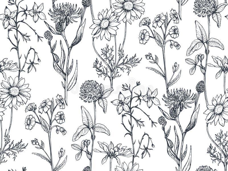 Sömlös modell för vektor med hand drog örter och blommor stock illustrationer