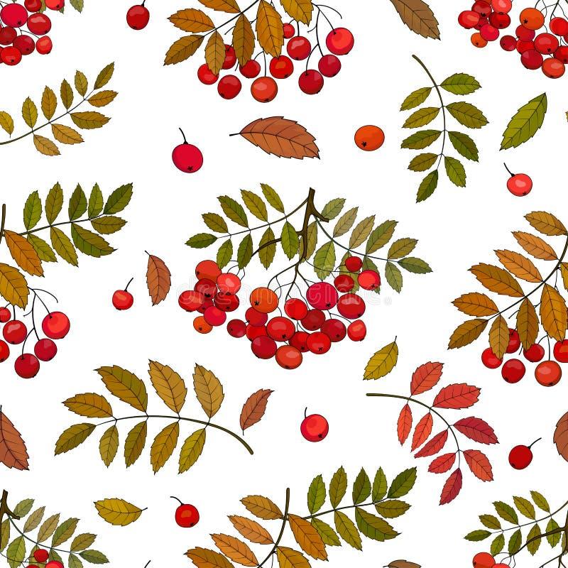 Sömlös modell med höstgrupper av rönnbär på en kvist med sidor och rönnpärlor på en vit bakgrund royaltyfri illustrationer