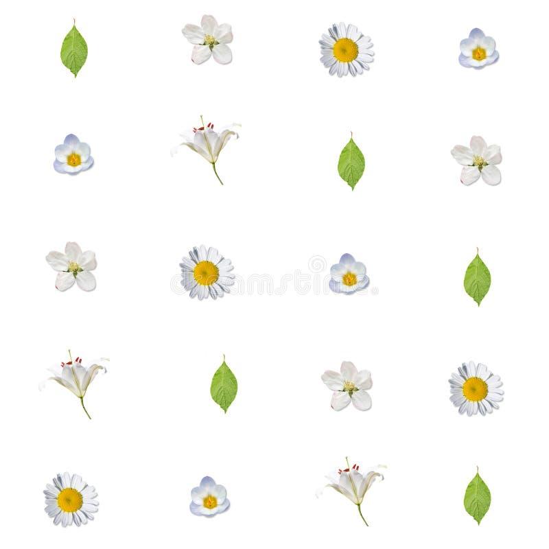 Sömlös modell med vita blommor och gräsplansidor royaltyfri bild