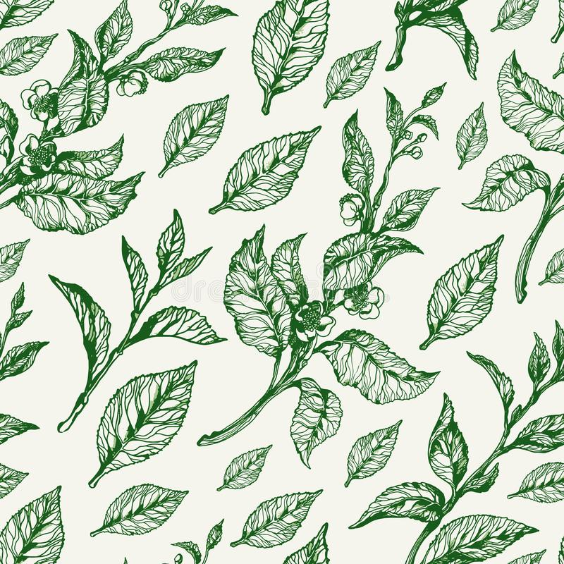Sömlös naturmodell för vektor Blom- illustration för tappning royaltyfri illustrationer