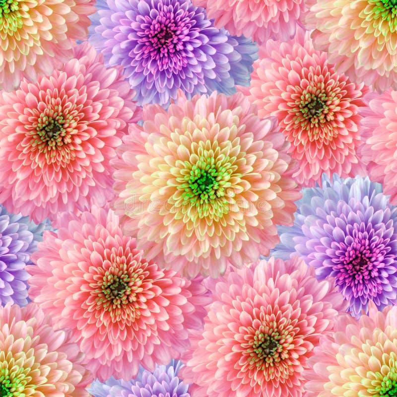 Sömlös oändlig blom- bakgrund för design och printing Bakgrund av naturliga krysantemum Vägg-legitimationshandlingar arkivfoto