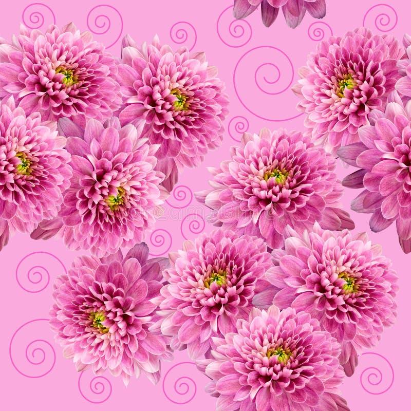 Sömlös oändlig rosa blom- bakgrund för design och printing Bakgrund av naturliga krysantemum royaltyfri illustrationer