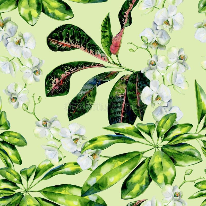 Sömlös tropisk modell för vattenfärg av scheffleraen, crotonen och vita orkidéblommor royaltyfri illustrationer