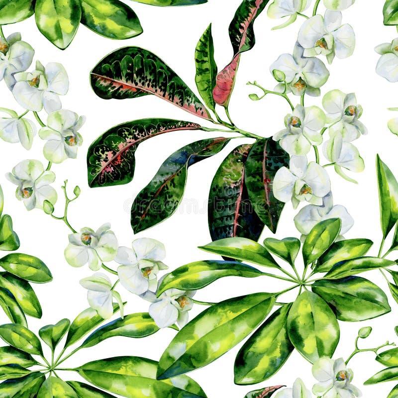 Sömlös tropisk modell för vattenfärg av scheffleraen, crotonen och vita orkidéblommor stock illustrationer