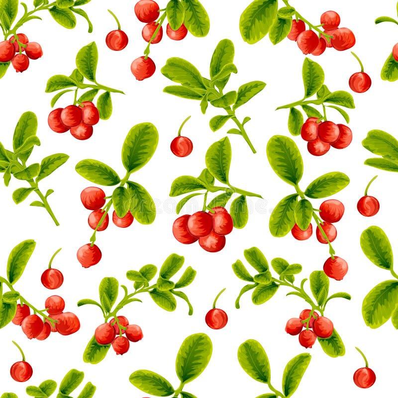Sömlösa modelllingonbär på en vit bakgrund vektor illustrationer