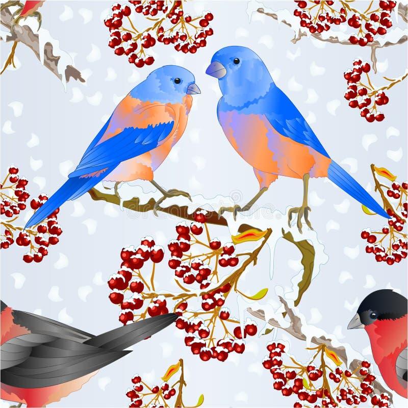Sömlösa texturfågelblåsångare och små songbirdons för domherre på på snöig illus för vektor för tappning för träd- och bärvinterb vektor illustrationer