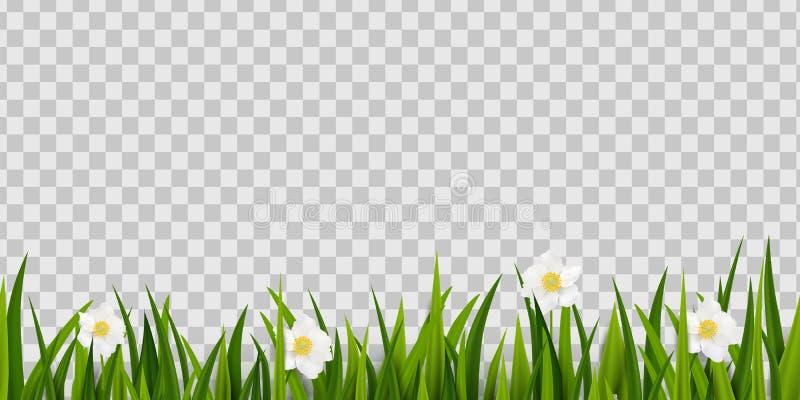 Sömlöst grönt gräs, vårblommor gränsar isolerat på genomskinlig bakgrund Beståndsdel för garnering för påskhälsningkort royaltyfri illustrationer