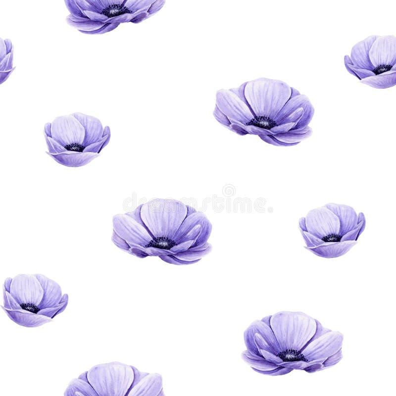 Sömlöst mönster av vattenfärgslila anemoner Isolerade handmålade blommor på vitt vektor illustrationer