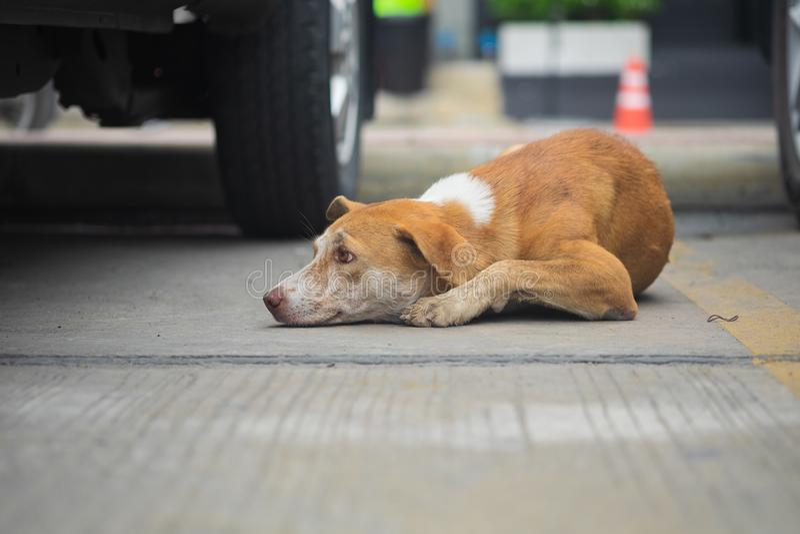 Sömn för tillfällig hund på golvet royaltyfri fotografi
