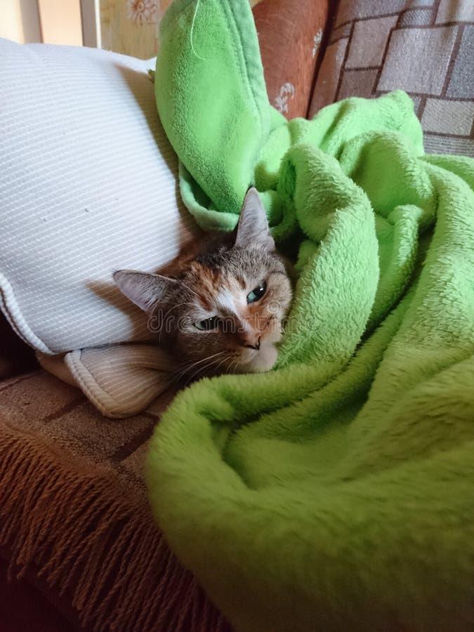 Sömnig katt royaltyfri fotografi
