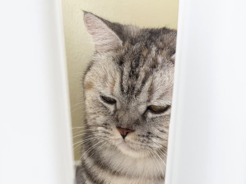 Sömnig katt, gulligt roligt kattslut upp och att koppla av katten arkivfoton