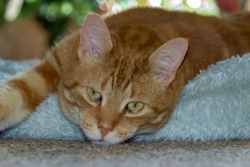 Sömnig katt på den blåa sittkudden royaltyfri fotografi