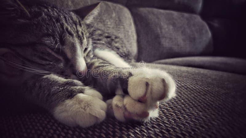 Sömnig katt på den lyxiga soffan royaltyfria bilder