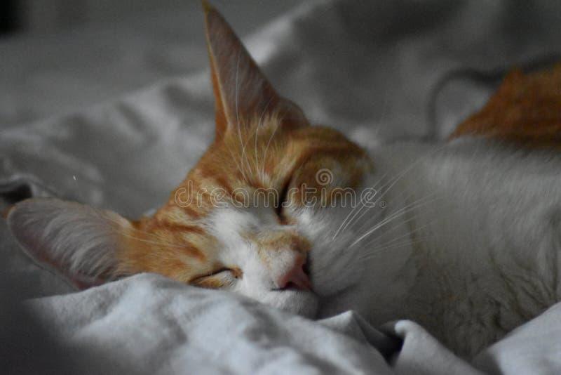 Sömnig röd och vit katt arkivfoto