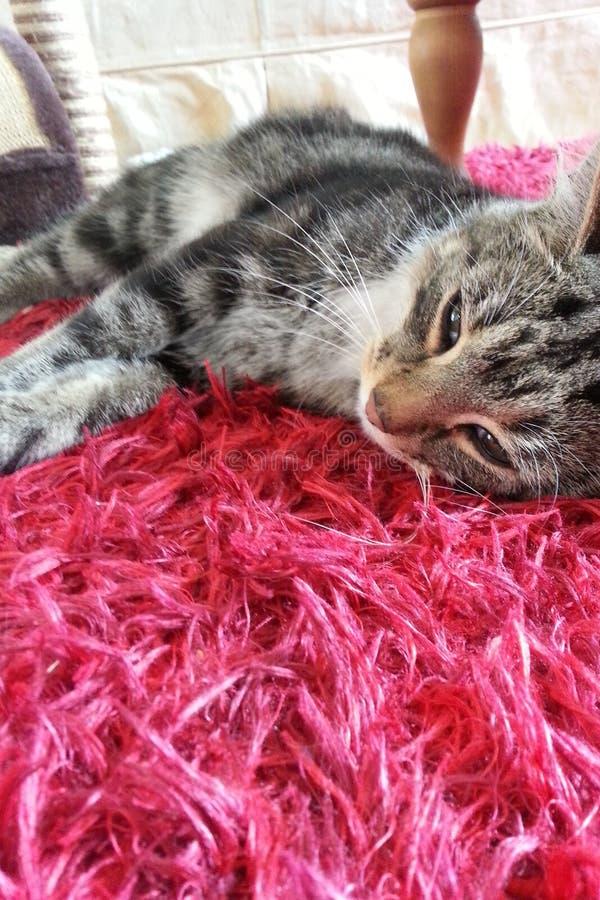 Sömnig strimmig katt royaltyfri foto