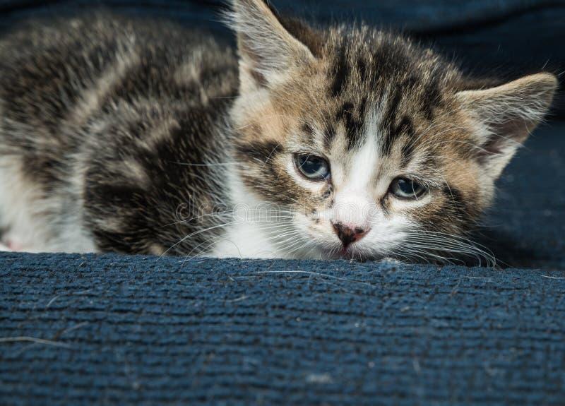 Sömnigt behandla som ett barn katten på soffan royaltyfri foto
