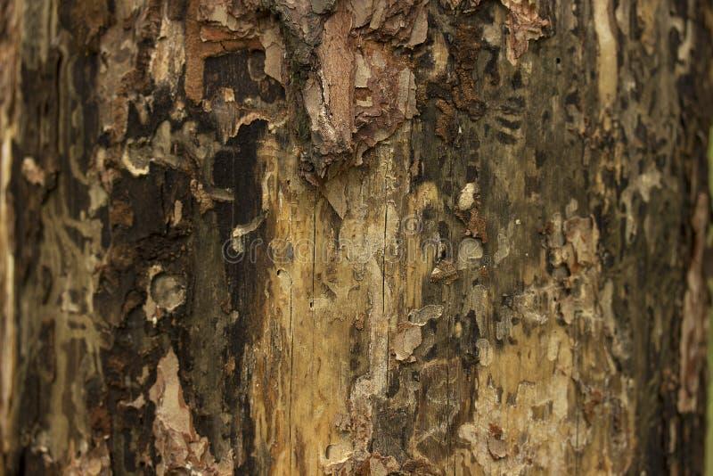 Sörja övre för textur eller för bakgrund för trädskäll nära arkivbilder