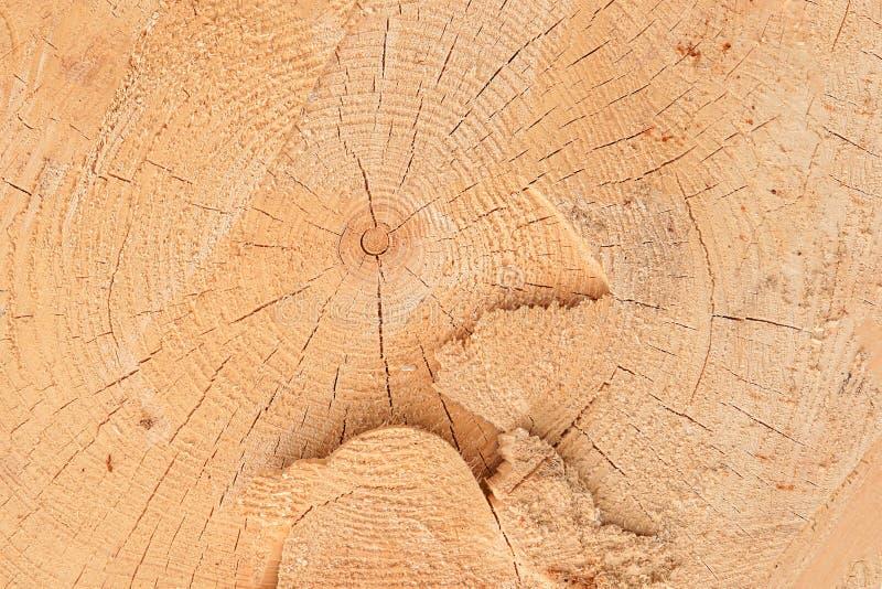Sörja bakgrundstextur som den beigea rena ojämna sågen klippte årliga cirklar för stora träsprickor royaltyfri bild
