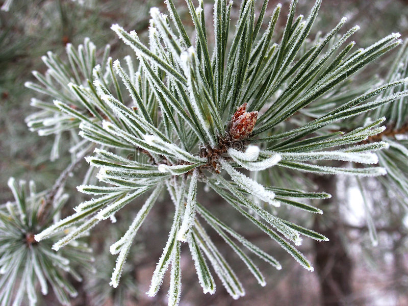 sörja den rimed treen arkivbilder