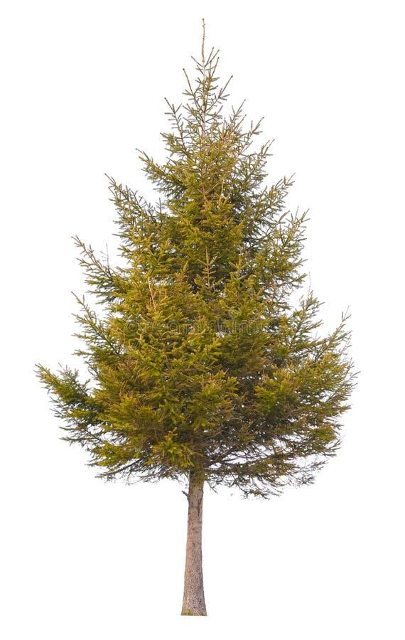 Sörja det isolerade trädet fotografering för bildbyråer