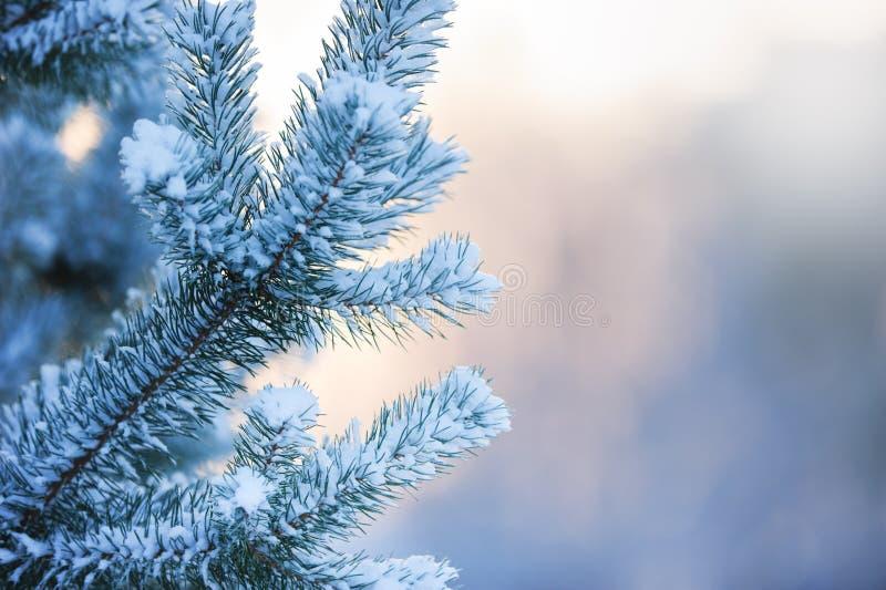 Sörja förgrena sig doldt med snow fotografering för bildbyråer