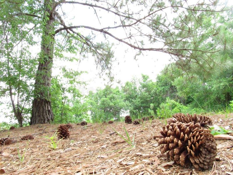 Sörja i skogen arkivbild