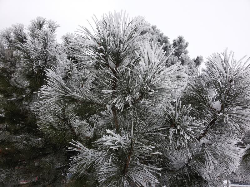 Sörja i vinter fotografering för bildbyråer