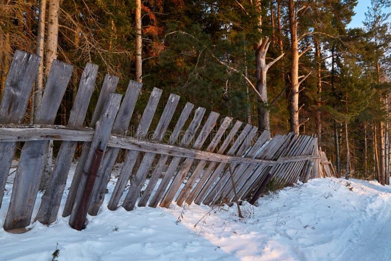 Sörja och skogen för granträdet bak trästaketet i landssidan i vinter arkivfoto